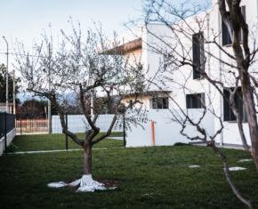 ulivo_giardino_casa